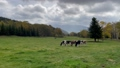 雲が流れる高原に草を食べる牛 83192723